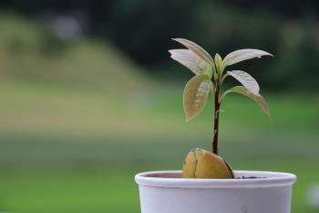 avocado-1488561_1280